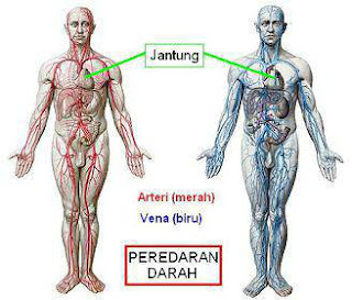 Sistem darah