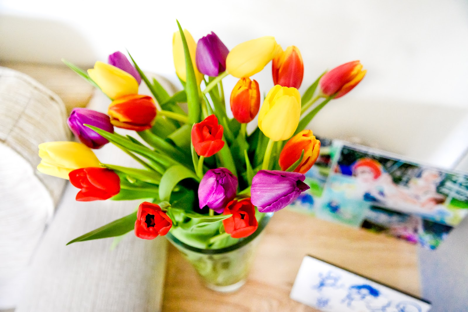 spring, rainbow tulips
