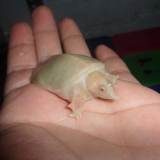 bayi-bulus-albino.jpg