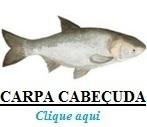 Peixe, Carpa Cabeçuda