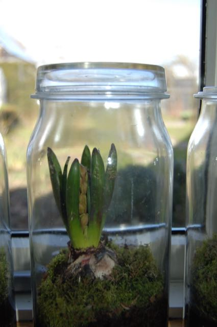 Hyacinth scent
