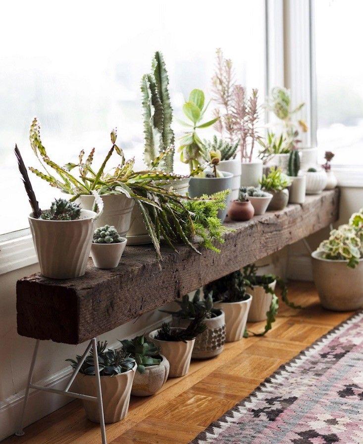 Decorar con cactus, las plantas con superpoderes_11