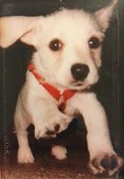 Suki Roth as a puppy.