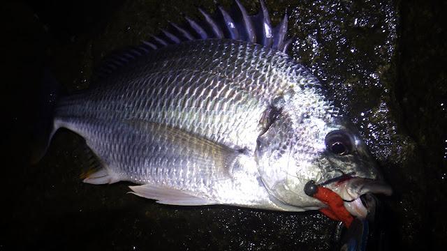 キビレ ボトムチニング 湾奥 河川 Chinu HEAD (チヌヘッド) SV-30 1/16oz.(1.8g) + エコギア 熟成アクア バグアンツ 2inch