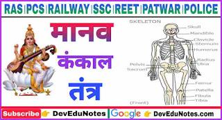 Human Skeleton System