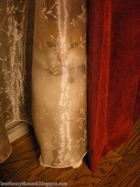 Invisible cat.