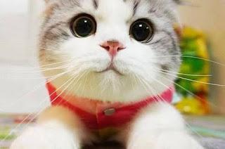 Bilakah Kucing Perlu Minum Air Kelapa?