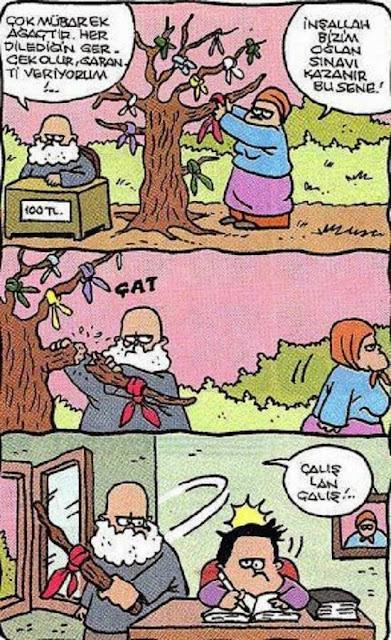 mübarek ağaç karikatür