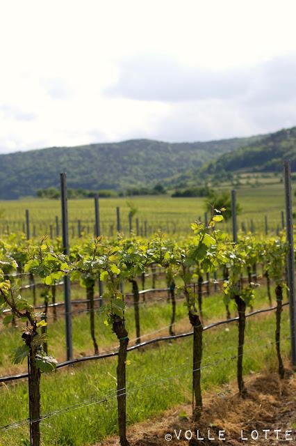 Wein, Weinstock, Wald, Pfälzer Wald