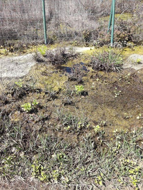 Στυλίδα: Πάρκο του Λαού - Ως πότε οι αρμόδιοι στον δήμο θα σφυρίζουν αδιάφορα;
