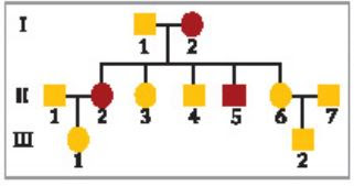 ملخص درس الأنماط الأساسية لوراثة الإنسان الوراثة المعقدة والوراثة البشرية العلم نور