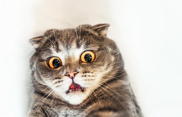yang dibenci kucing