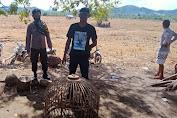 Judi Sabung Ayam Dibubarkan Polsek Plampang, Pelaku Lari Kocar Kacir