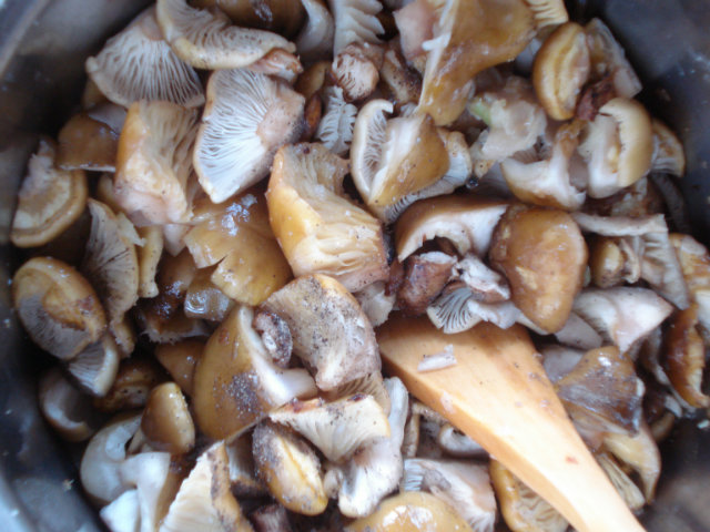 saute honey mushrooms