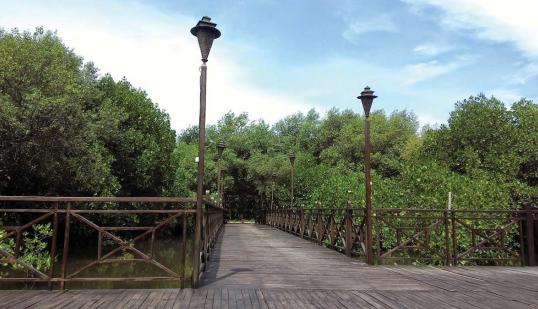 Manfaat Hutan Mangrove atau Bakau Serta Upaya Menjaga Kelestarian Sumber Daya Alam