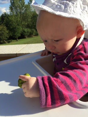 A nearly 6 month old baby in a white highchair, striped babygrow and white hat holding a piece of broccoli and considering it