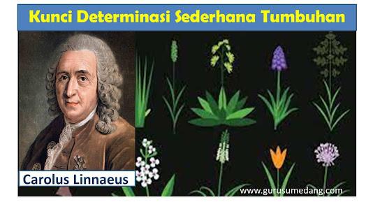 Sobat guru berikut ini saya sodorkan kunci determinasi sederhana untuk menentukan golongan dalam tumbuhan sampai tingkat kelas/classis.