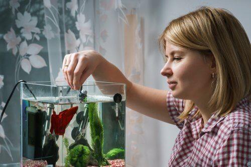 Apa Itu Bakteri Starter Dan Fungsinya