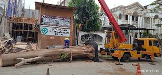 Penanaman pohon bodih