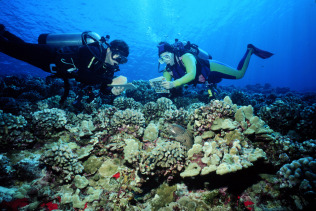 REEF Volunteer