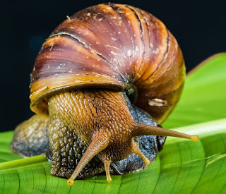 Snail Feed And Categories