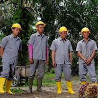 Loker Sawit - PT. Karya Dewi Putra (Agrosubur) Posisi Asisten Afdeling dan Asisten Electrical PKS (Dibutuhkan Segera)