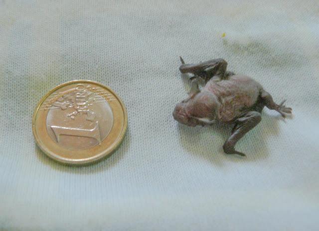 O mamífero mais pequeno do RIAS