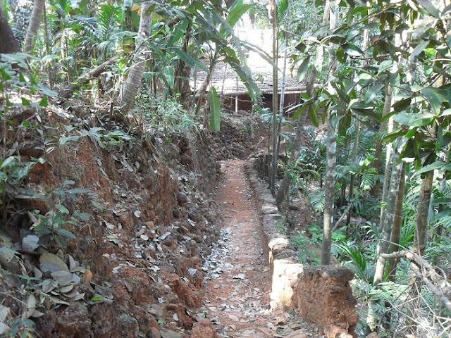 Тропинка в индийских джунглях