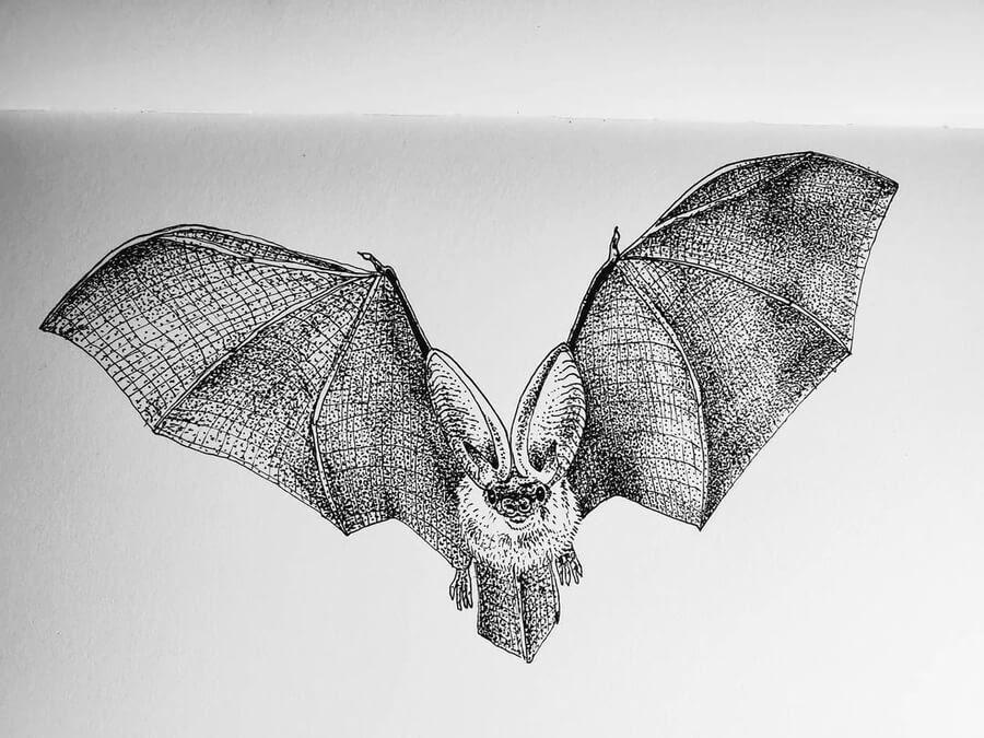 06-Flying-bat-Ashley-Habernal-www-designstack-co