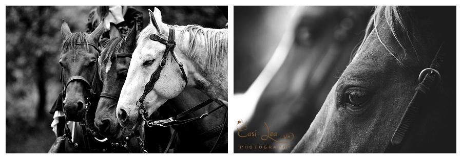 www.CasiLea-Photography.com