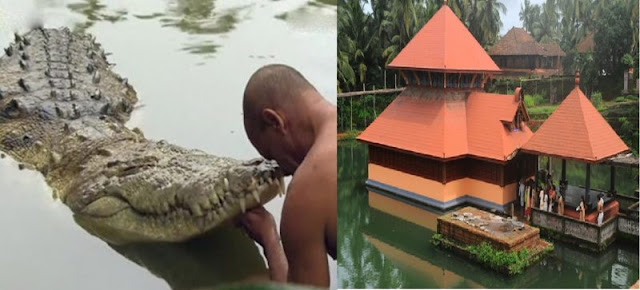 crocodile facts in hindi