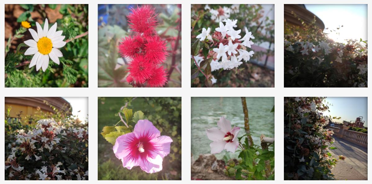 Fotografía de flores por Madirex
