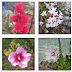 Madirex Fotos - Flores #1