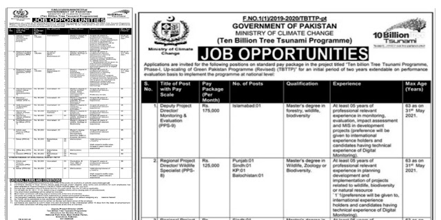 Ten Billion Tree Tsunami Programme Ministry Of Climate change Jobs 2021For Communication Officer, Planning Officer, Monitoring Officer & more