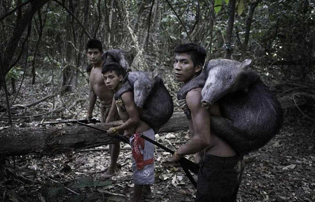 Bộ lạc có nguy cơ tuyệt chủng cao nhất hành tinh