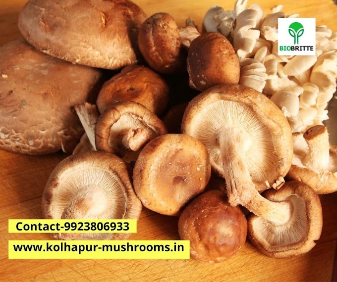 Mushroom cultivation training in pune agriculture college