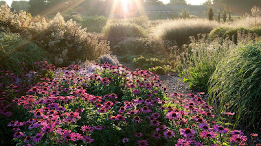 Sussex Prairie Garden