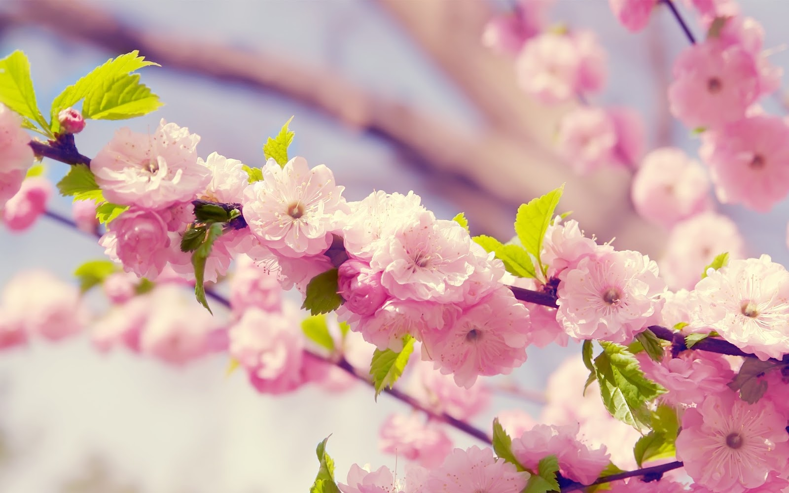 100 Hd Spring Wallpapers 4k For Desktop Free 2020 Page 5 Of 9 We 7
