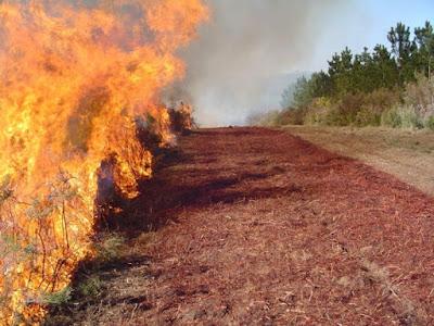 Cortafuegos incendio