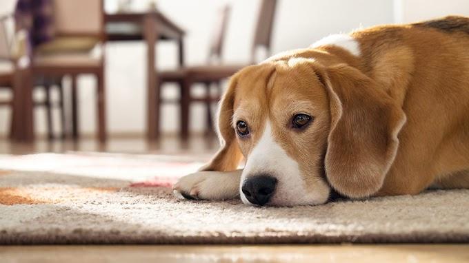 Πλήρωσε ακριβά την κακοποίηση σκύλου