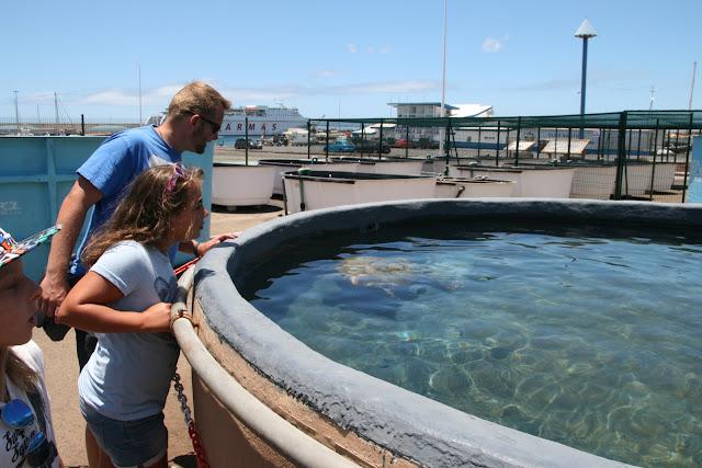 Meeresschildkröten Aufzuchtstation Fuerteventura 05