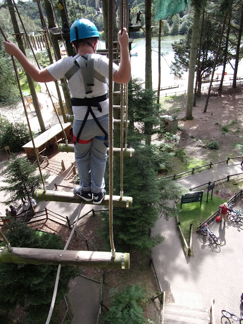 extreme treetop walking harnessed