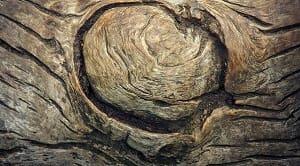 Rumus menghitung kerapatan kayu dapat dibedakan menjadi beberapa bagian dan juga dilihat dari berbagai kondisi kayunya. Kondisi yang dimaksud adalah kerapatan kayu pada kondisi segar, kerapatan kayu pada kondisi basah, kerapatan kayu pada kondisi kering udara, dan kerapatan kayu pada kondisi kering tanur yakni sebagai berikut ρn = Mn/Vn (g/cm3)