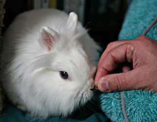 cara melatih kelinci agar nurut