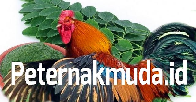 Jamu Ayam Daun Kelor
