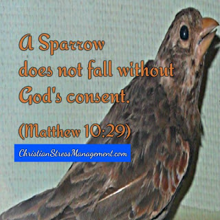 A sparrow does not fall without God's consent. (Matthew 10:29)