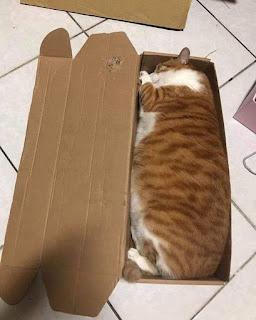 Foto kucing lucu kucing benda cair