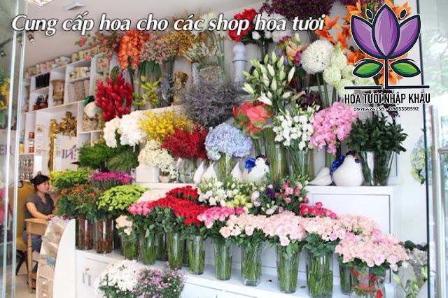 Hoa hong phan Diana B400- B350- B300