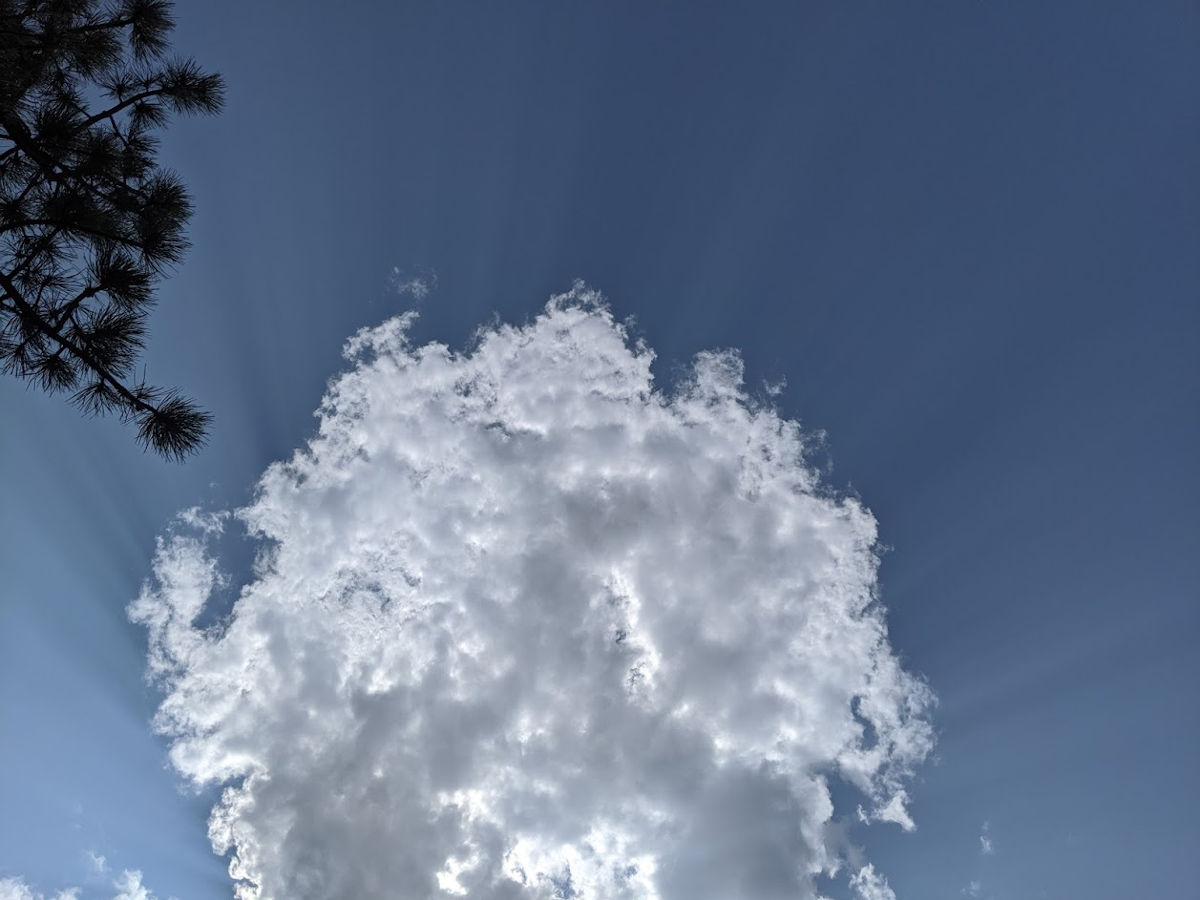 A floating cloud and clear sky with trees in the foreground.