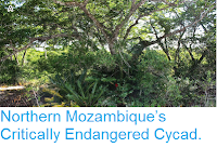 https://sciencythoughts.blogspot.com/2015/05/northern-mozambiques-critically.html